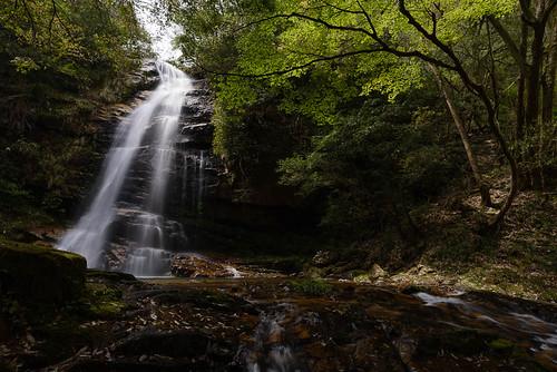 green leaves japan river waterfall 日本 shimane 滝 新緑 島根県 邑南町 02景色 邑智郡 赤馬滝 akaumataki