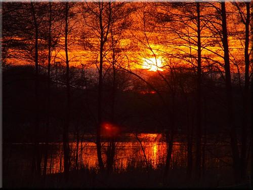 trees light sunset water licht wasser sonnenuntergang olympus bäume e620