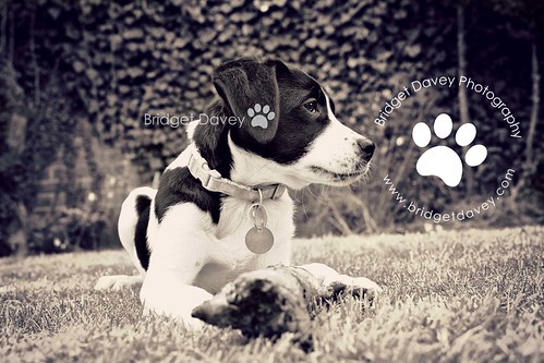 Dorry | Pet Photography Leighton Buzzard
