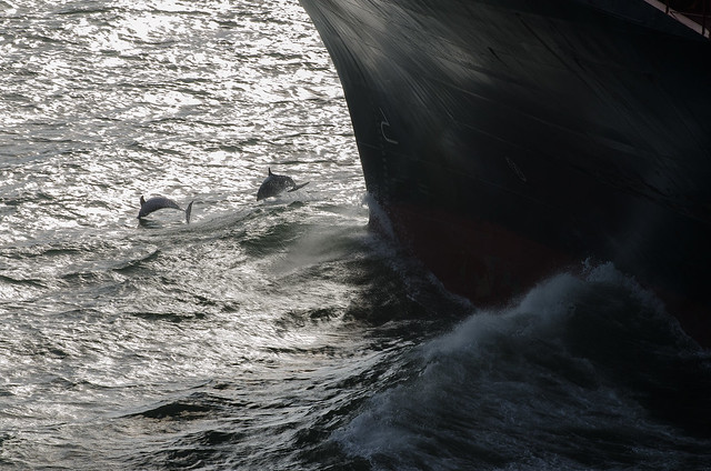 Ship's Bow and Dolphins