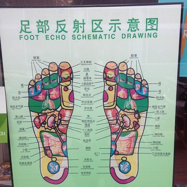 Small garden cartoon - Foot Echo Schematic Diagram Flickr Photo Sharing
