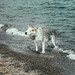 Small photo of A dog's tale (cont)