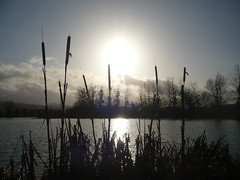 Soleil d'hiver sur le Loch (Bucey-les-Gy)