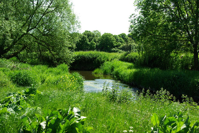 Roding River Meanders