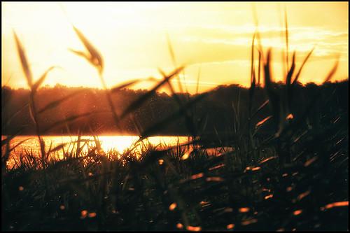 evening sun by andrè t.