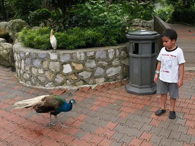 20130411_kl2_birdjulian