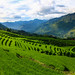 Rice Terraces in the Valley