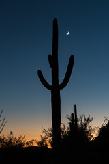 1609 Saguaro and Moon
