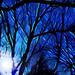 Morning Blue_3_7762 by Rikx