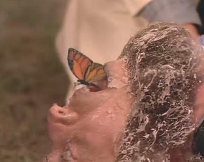 eeevil butterfly