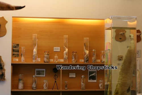4 Icelandic Phallological Museum - Reykjavik - Iceland 17