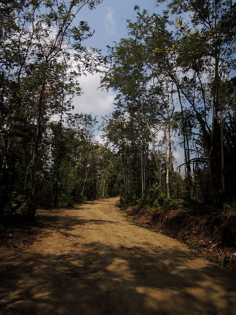 TEAK FOREST OF WEST JAVA