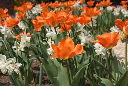 Blumen in Stadtpark Wien