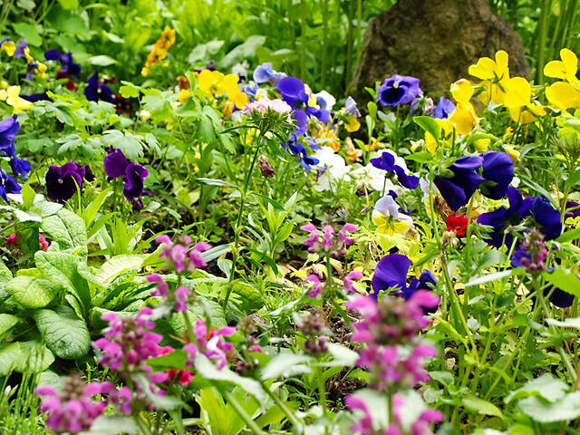 Wild Flowers, Strathpeffer, Scotland