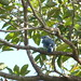 Small photo of Villa Maria birds