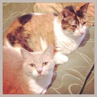 Chandler & Cleocatra