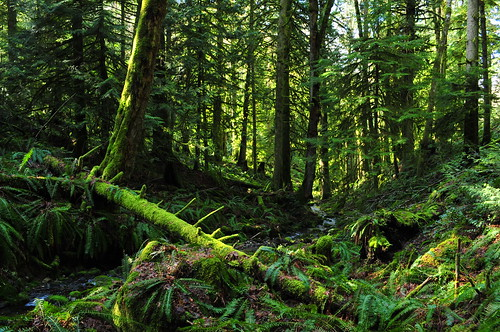 park trees canada green moss spring bc victoria 1855mmf3556g iamcanadian gowlandtod cans2s nikond300