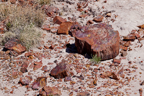 Scattered Petrified Wood