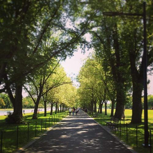 櫻花樹綠了。 Day_044