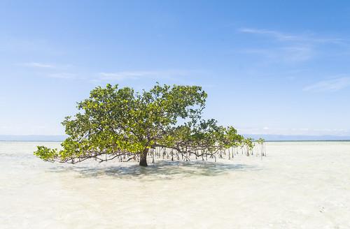 Panglao paradise