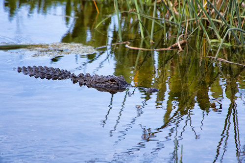 Florida Wetlands - Koontz