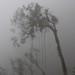 Trees  with vines in the fog - Árboles en la neblina; camino entre San Pedro Ocotepec y San Lucas Camotlán, Región Mixes, Oaxaca, Mexico por Lon&Queta