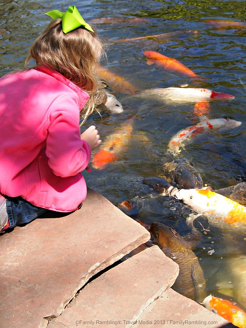 Feeding Koi at Fort Worth Japanese Garden