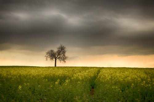 Tree and Rapeseed