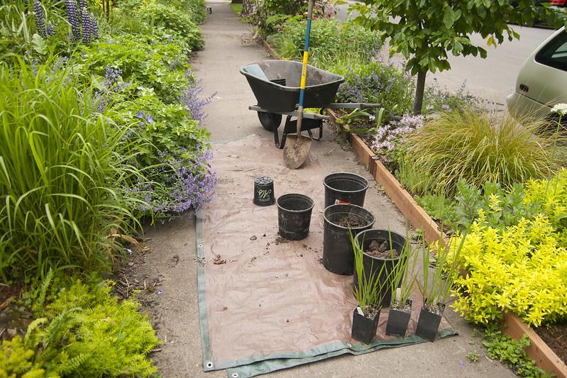 Planting setup