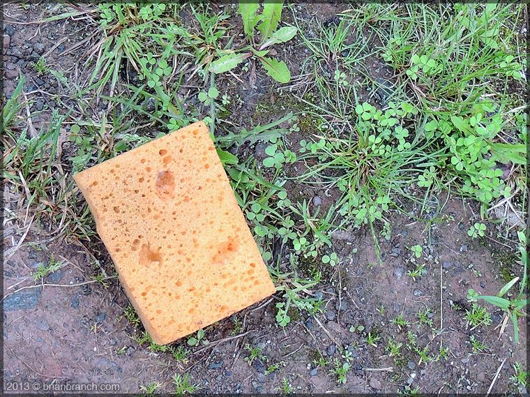 DSCN1321_sponge