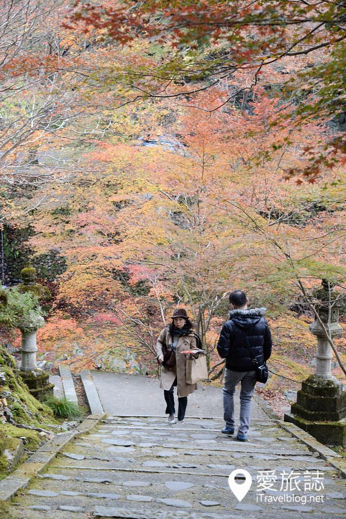 京都赏枫景点 高雄西明寺 39