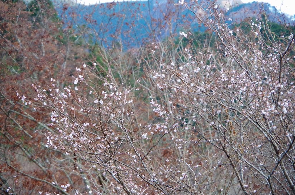 20131201_Mt.Mitou 024