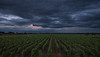 Dark Sky over the Wineyards