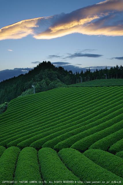 山添村,お茶畑(K70_1045G,18 mm,F8,iso100)2016yaotomi
