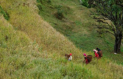 Annapurna, Nepal - Terraced fields in Annapurna