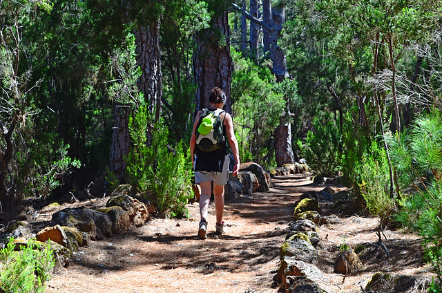 Walking in the Pine Forest, La Orotava, Tenerife