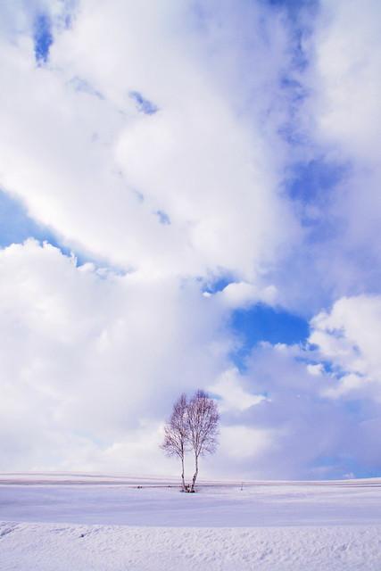 寄りそう木
