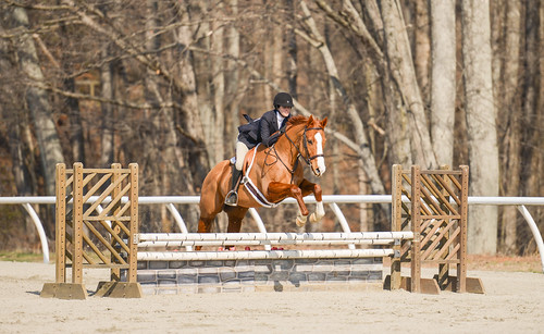 sports animal animals jumping equine equitation bridgewatercollege inthetropics carinbrown