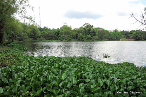 water-lilies-ninoy-aquino-parks.jpg