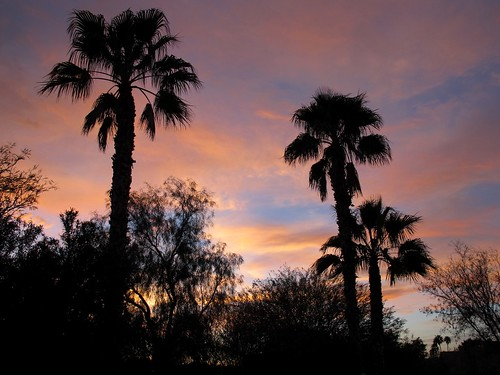 light sunset arizona sky southwest color nature phoenix beauty skyline clouds evening view sundown silhouettes palmtrees oasis mybackyard happyhour backyardsunset skyshow valleyofthesun zoniedude1 canonpowershotg11 earthnaturelife oasisskyshow mydesertoasis