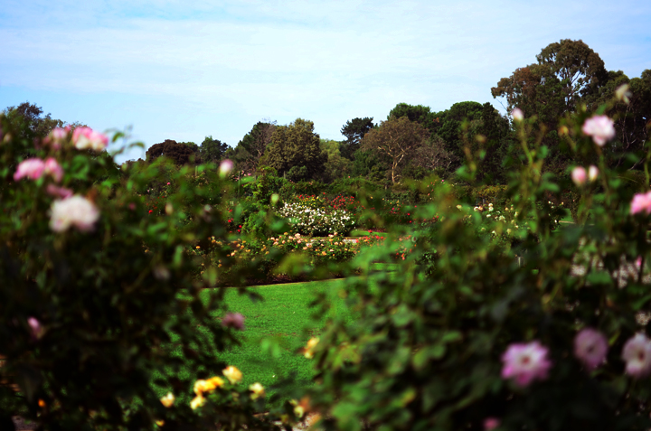 rose garden at werribee mansion hotel and spa