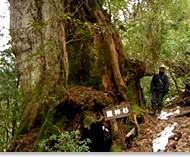 屋久島自然活動中心遊程-1