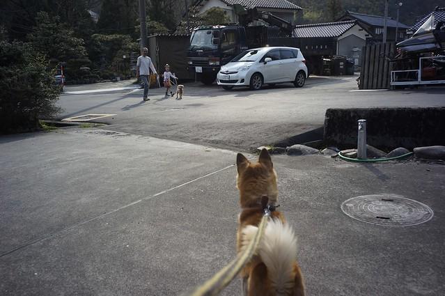 犬と散歩!w