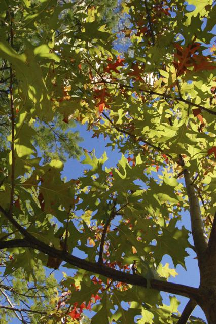 sky & leaves