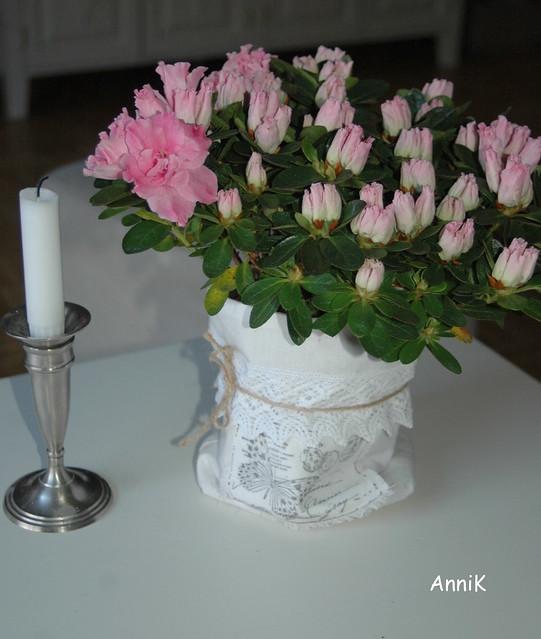 Kukkia 004