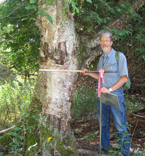 Paul Rutledge provides scale by standing near a large Yellow Birch found on the Trapp Farm Nature Preserve Wetland Reserve Program project. (NRCS photo/Kathy Ryan)