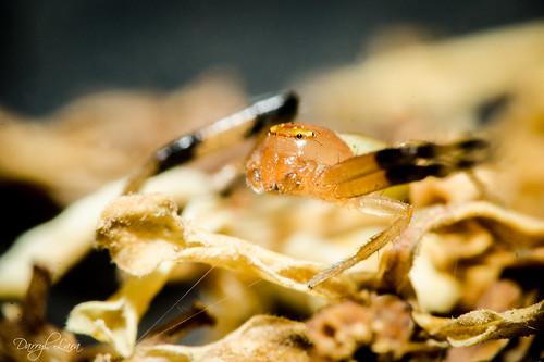 crab (1 of 2)