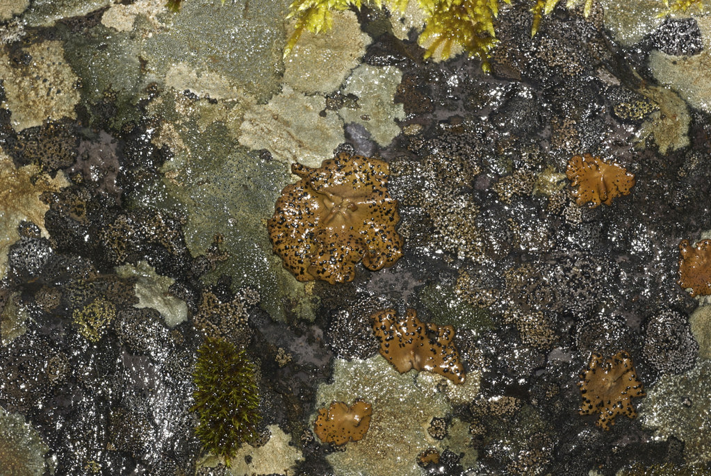Lichens and moss
