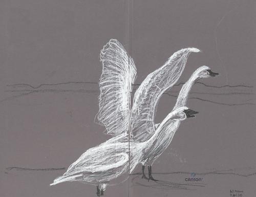 20130404 BellMuseum_swans