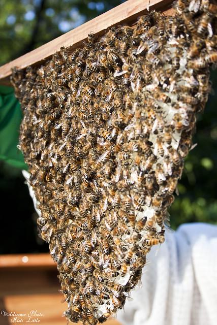 bees_comb2